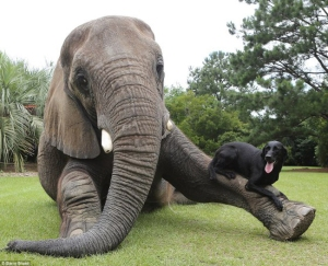 bella-dog-bubbles-elephant-1